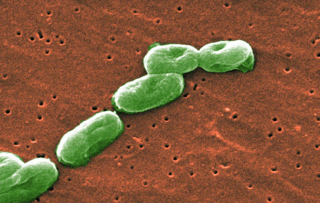为了拯救被超级细菌包围的年轻女性,科学家们正在寻找杀手级病毒